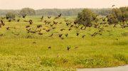 WWF viện trợ 2,6 tỷ đồng cho Vườn Quốc gia Tràm Chim
