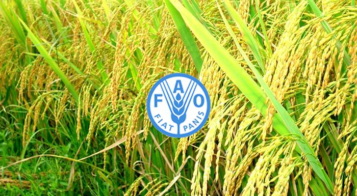 Tổ chứ Liên Hợp Quốc Lương Thực và Nông Nghiệp (FAO)