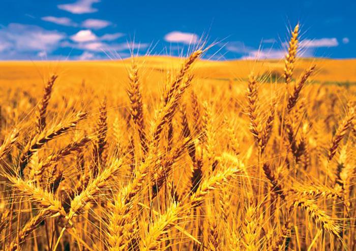 FAO đảm bảo nguồn cung lương thực cho các quốc gia trên toàn thế giới